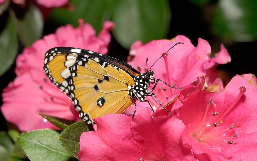 Giải mã bí mật hình xăm bươm bướm đẹp
