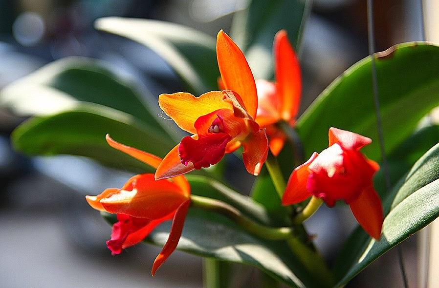 Hạt giống hoa lan đẹp nhất