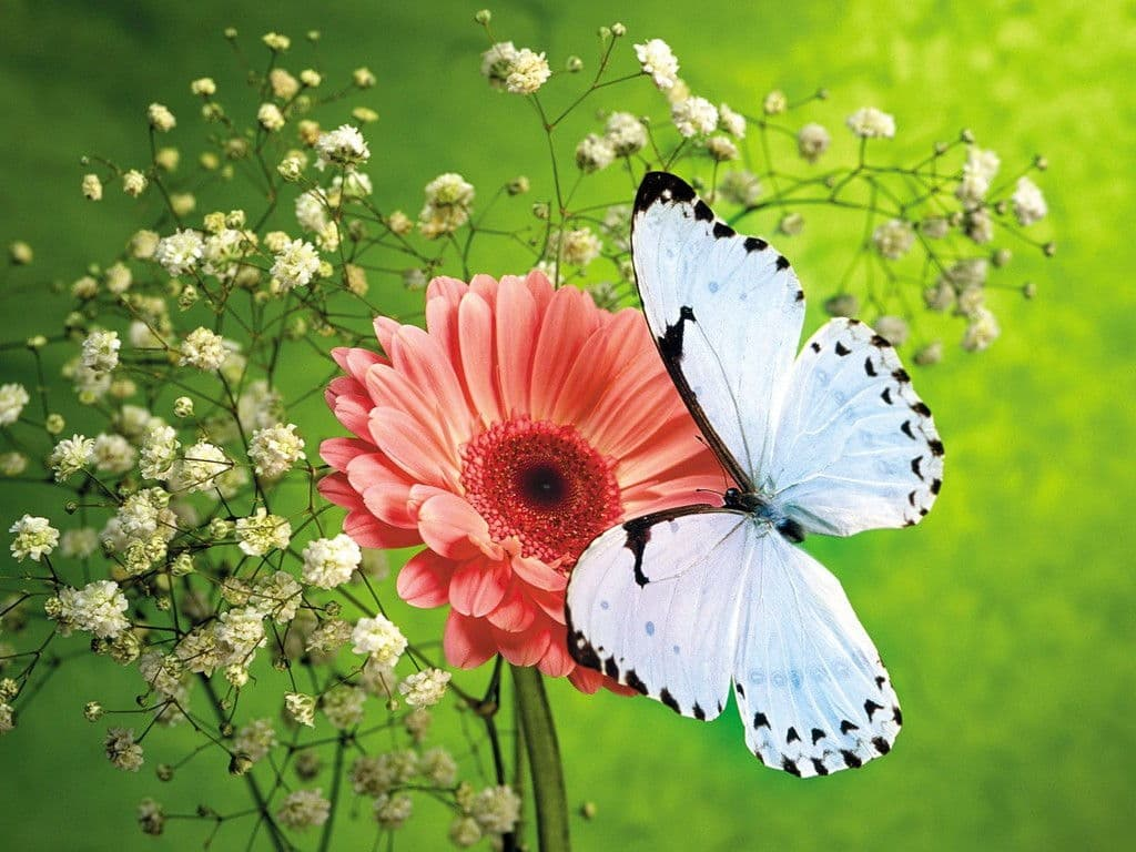 Hình ảnh bướm bay