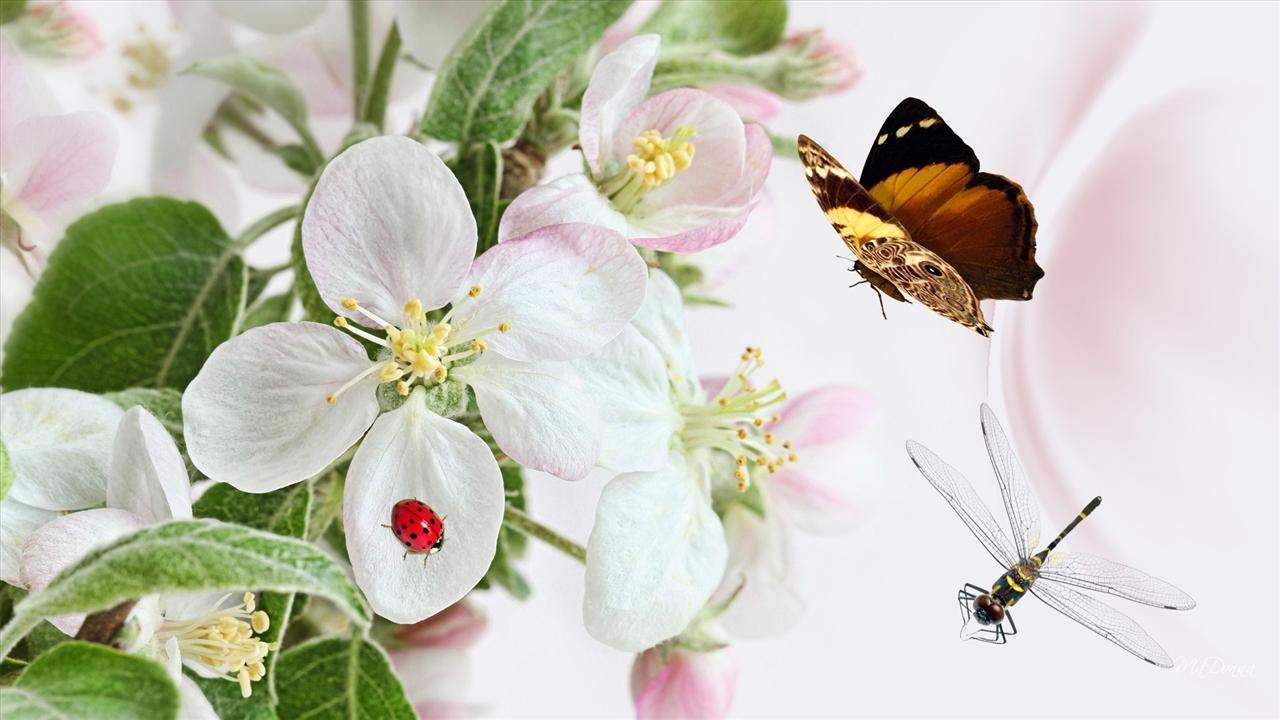 Hình ảnh bươm bướm bay đẹp nhất