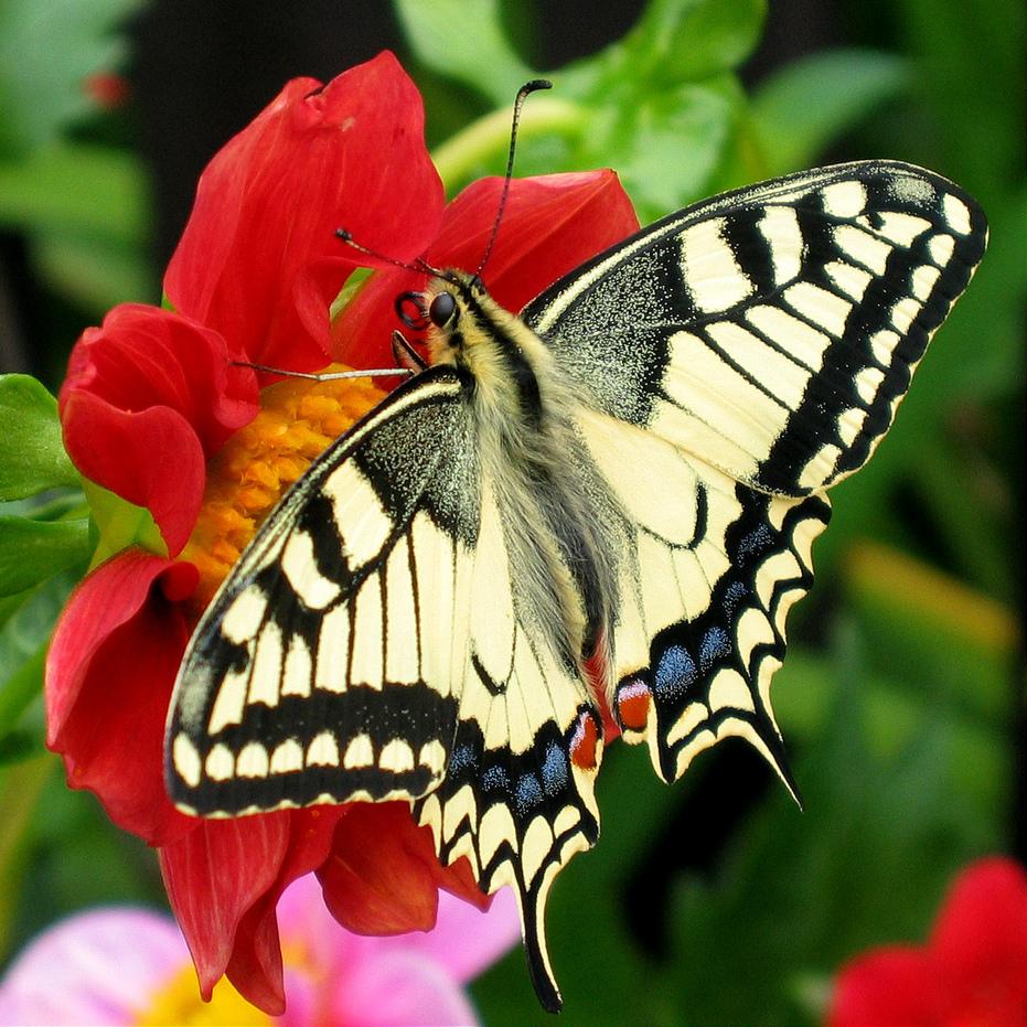 Hình ảnh bươm bướm dễ thương