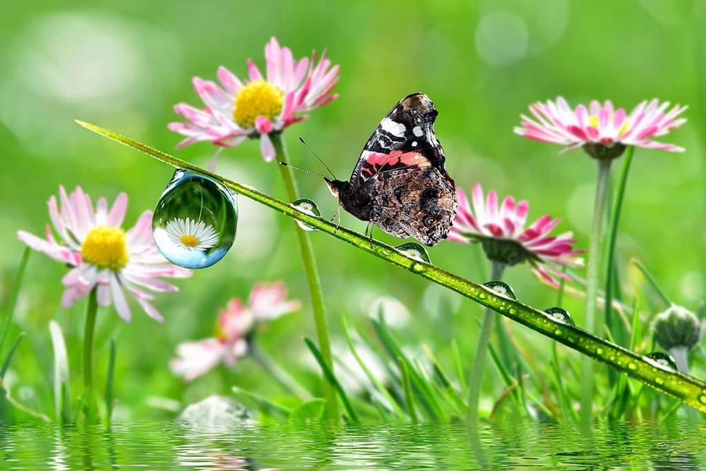 Hình ảnh bướm đẹp đậu trên nhụy hoa