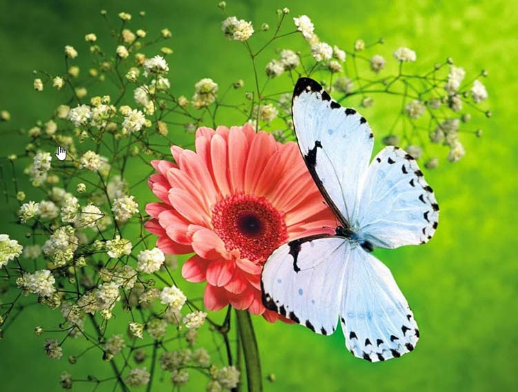 Hình ảnh bướm đẹp sưu tầm cho bộ sưu tập nhiếp ảnh gia