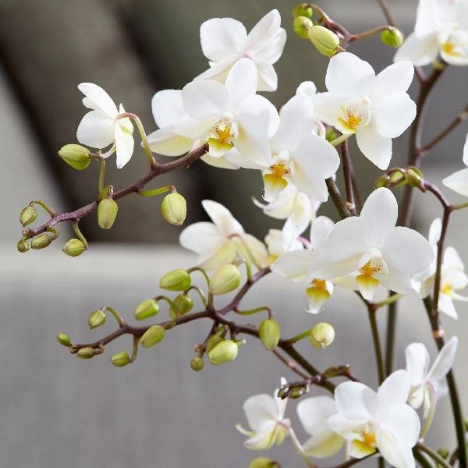 Hình ảnh cây lan đẹp và màu sắc rực rỡ nhất