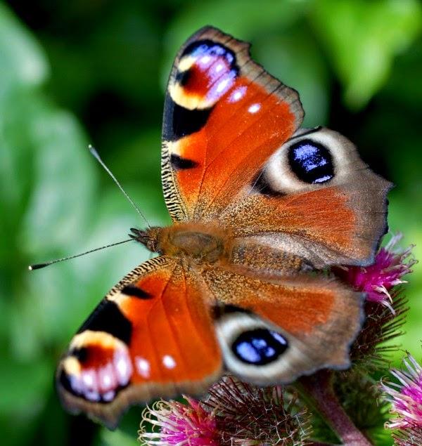 Hình ảnh con bướm ở Đà Lạt