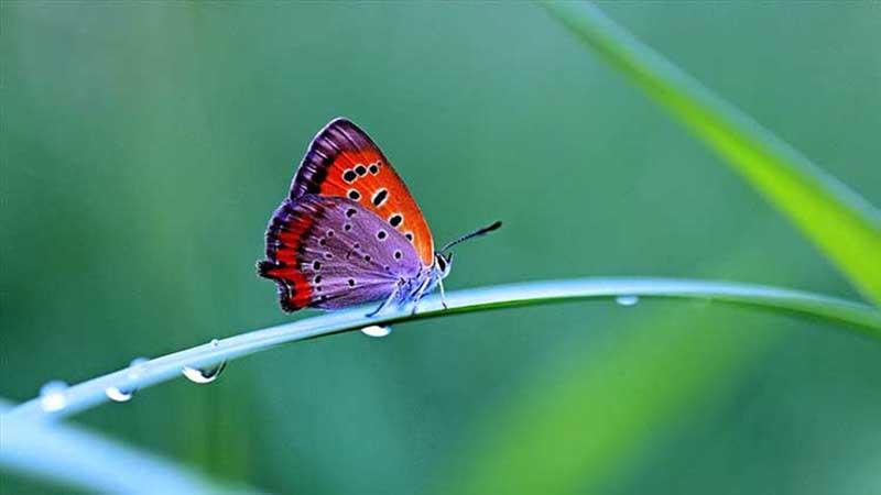 hình ảnh con bướm tuyệt đẹp