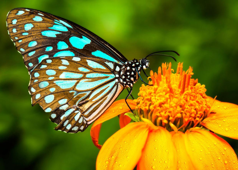 Hình ảnh hình nền con bươm bướm đẹp dễ thương