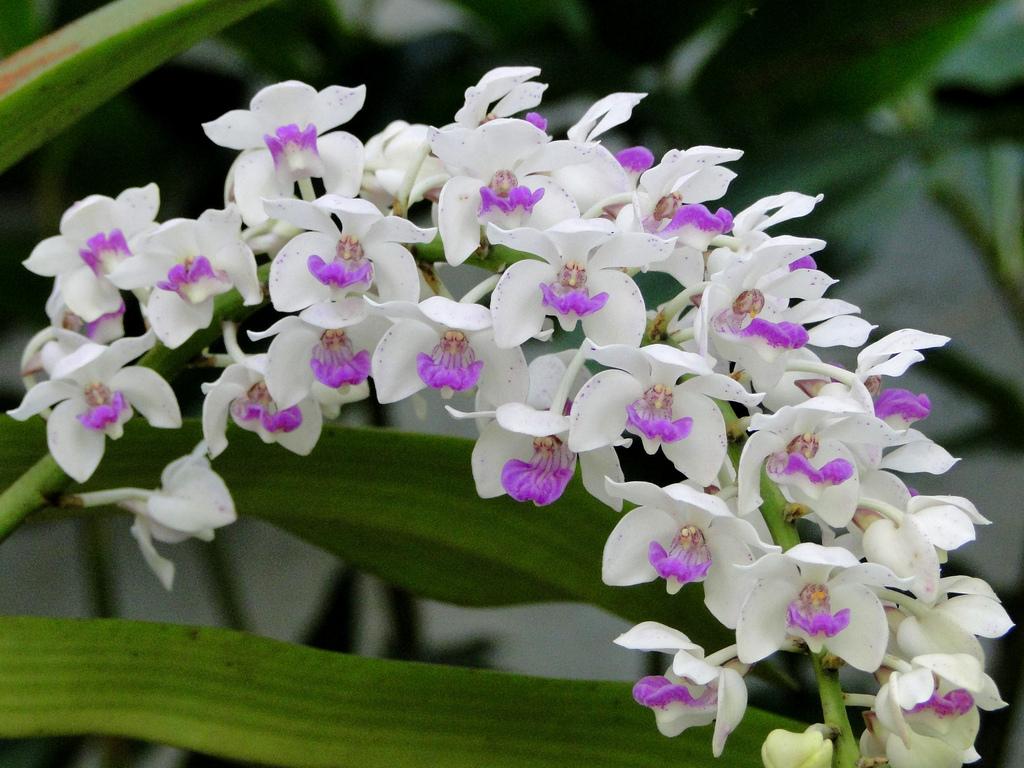 Hình ảnh hình nền hoa ngọc lan đẹp nhất