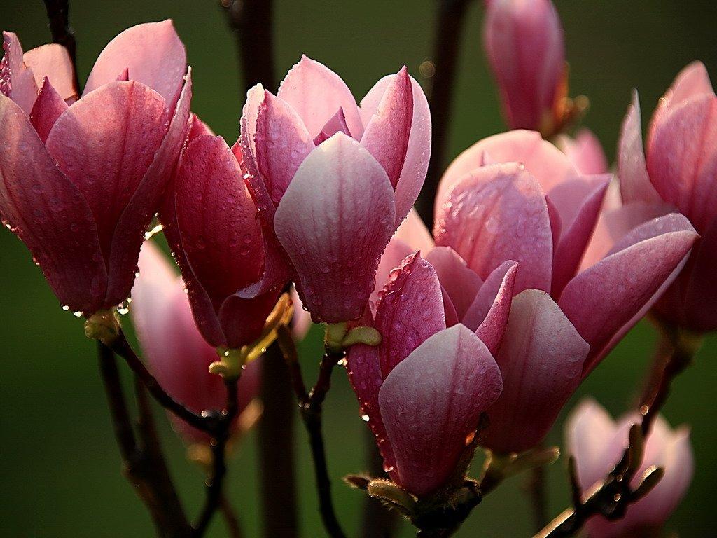 Hình ảnh hoa lan chuỗi ngọc