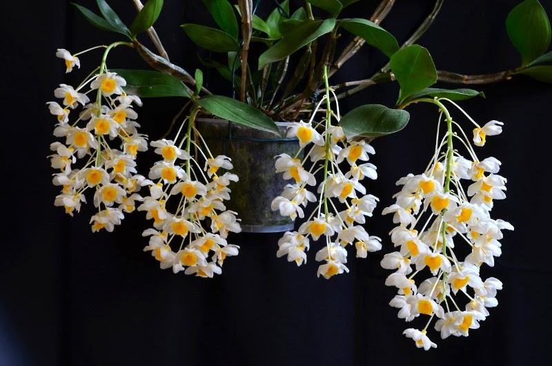 Hình ảnh hoa lan rừng đẹp nhất