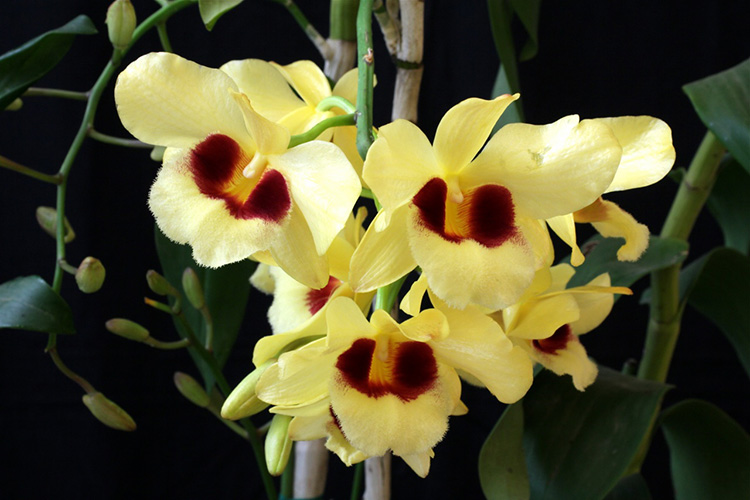 Hình ảnh hoa phong lan rừng đẹp nhất