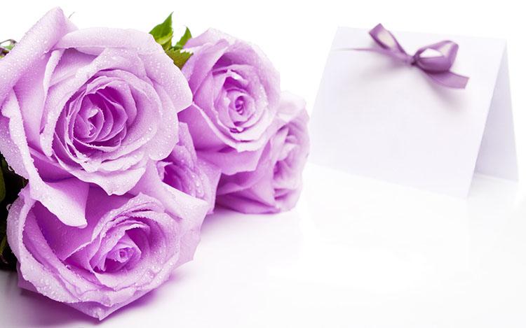 Hình ảnh shop bán hoa hồng tím