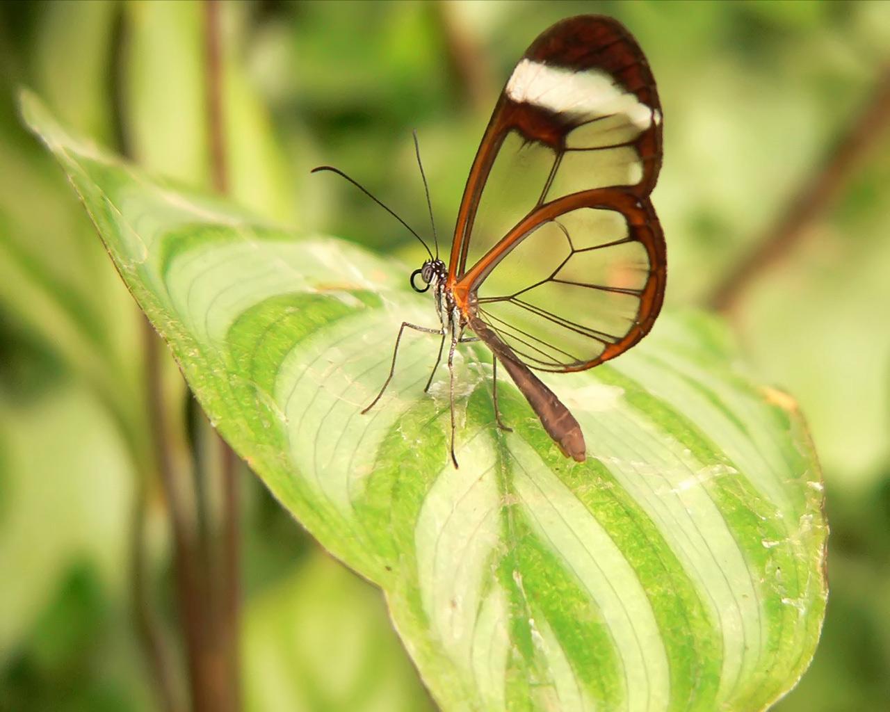Hình ảnh trang sức thời trang bươm bướm bay đẹp nhất