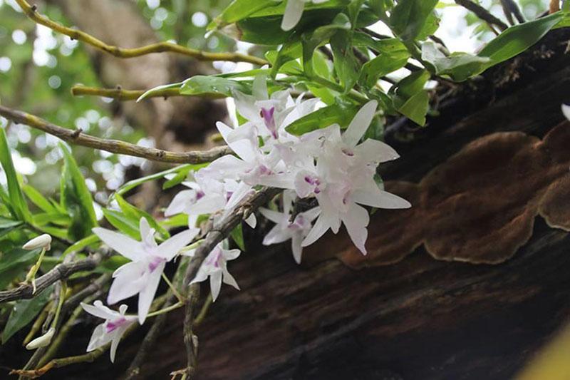 Hình ảnh vườn hoa lan đẹp