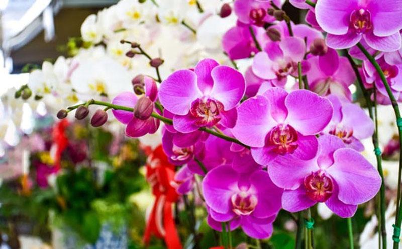 Hình xăm hoa lan đẹp
