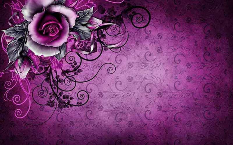 Hoa hồng tím ở hà nội