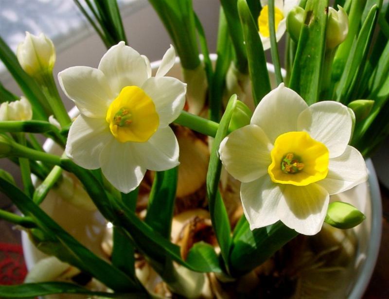 Hoa ngọc lan dịu dàng đep nhất