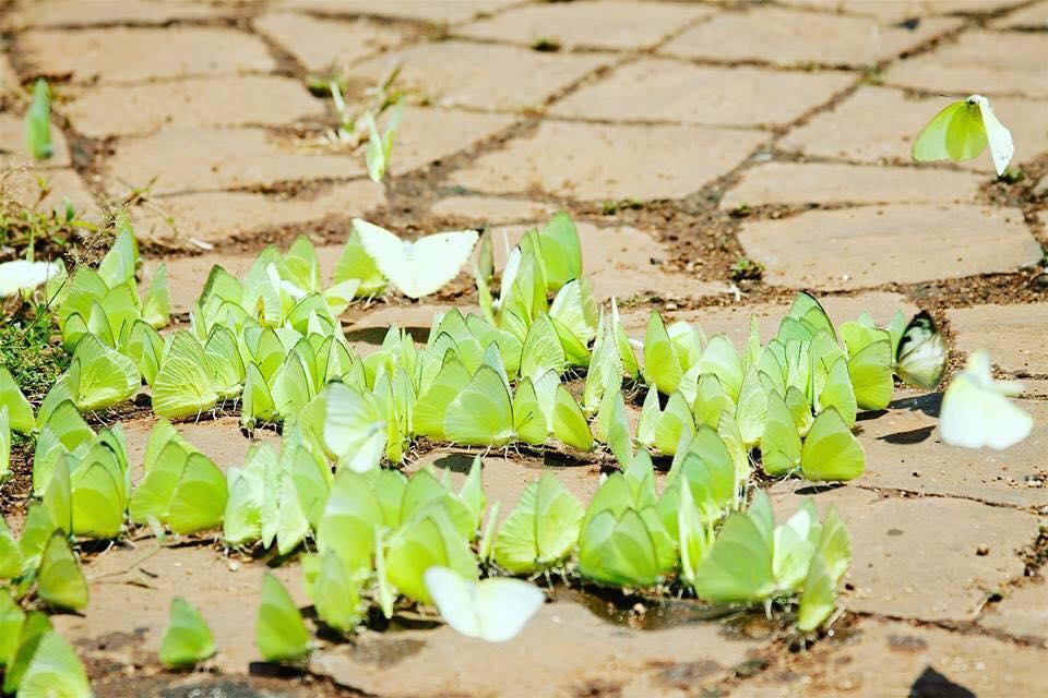 Khu vườn hoa bươm bướm lung linh trong nắng mai
