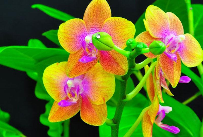 Mẫu hoa lan pha lê đẹp