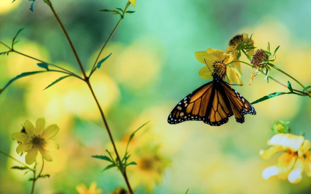 Mỗi con bướm là một linh hồn
