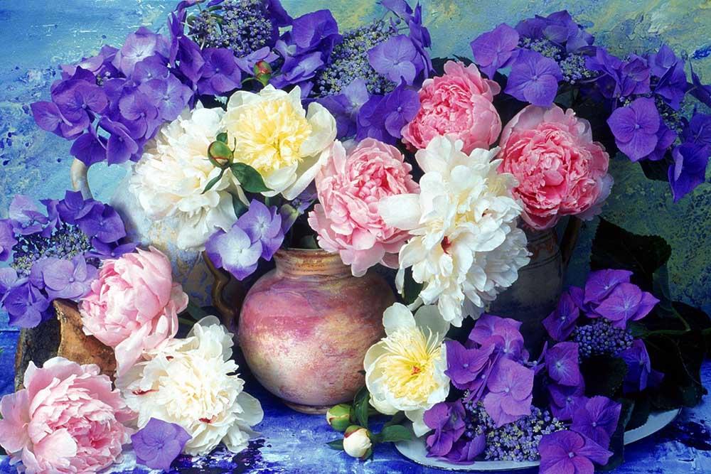 Mua hoa hồng tím ở thành phố hồ chí minh