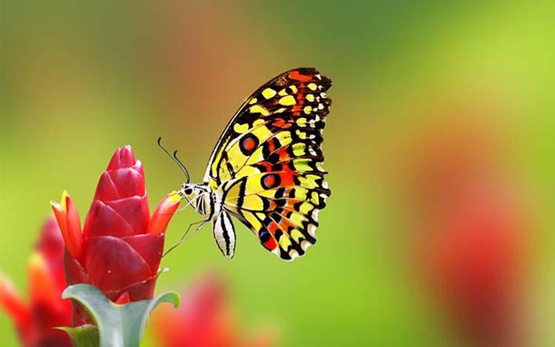 Những hình ảnh bươm bướm đẹp nhất cho hình nền điện thoại