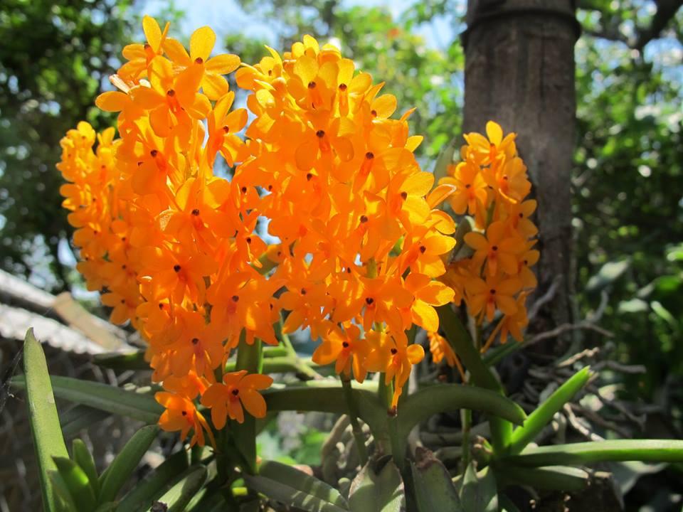 Rừng hoa lan ở Đà Lạt
