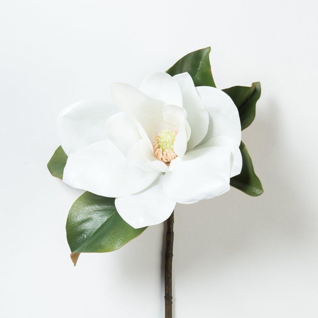 Tác dụng của cây hoa ngọc lan