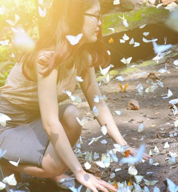 Tháng 4 đến với rừng cúc phương ngắm hàng ngàn con bướm bay ngập trời