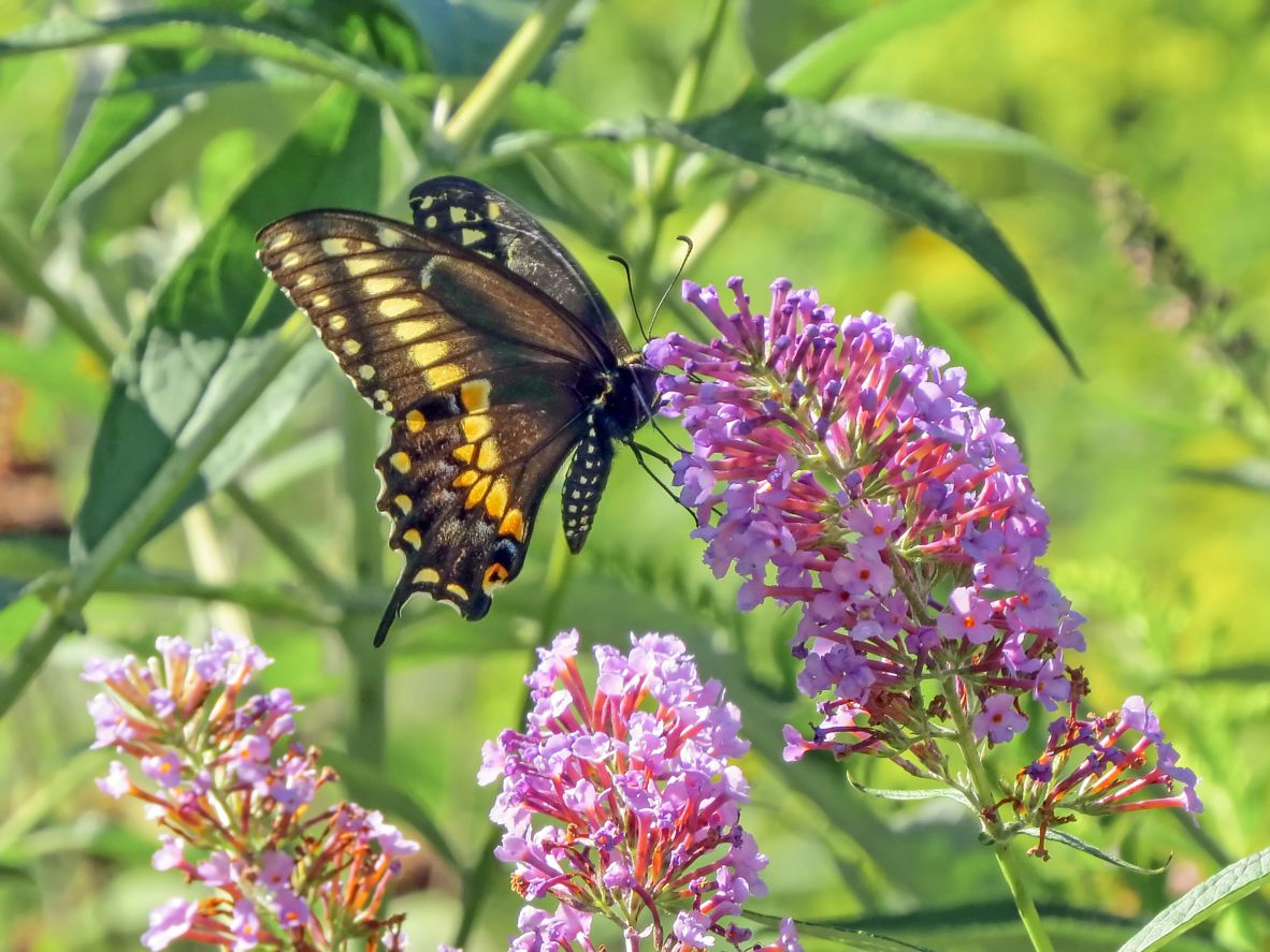 Tổng hợp hình ảnh con bướm dán tường