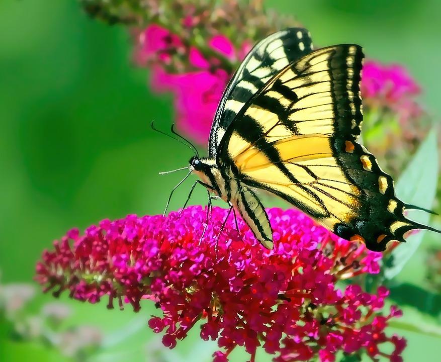 Tổng hợp hình ảnh hình nền bươm bướm bay đẹp nhất