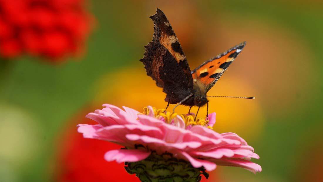 Tranh bươm bướm đẹp nhất