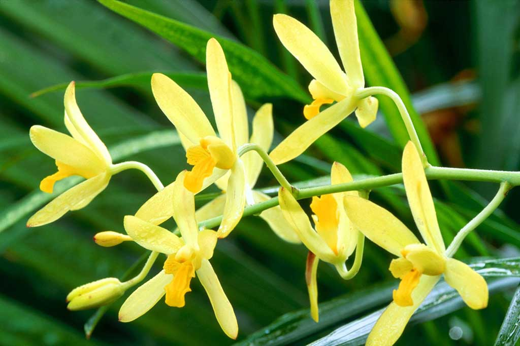 Tranh thêu chữ thập hoa ngọc lan