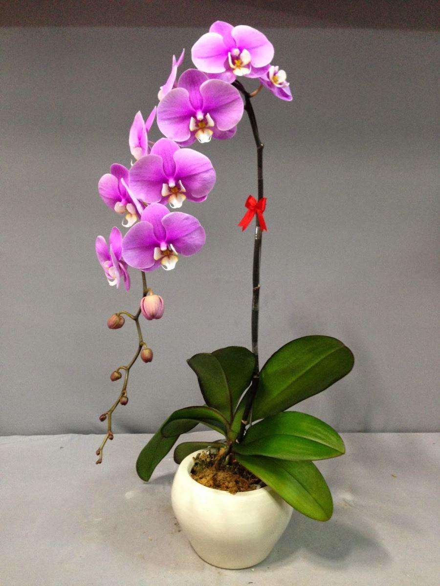 Ý nghĩa của loài hoa phong lan đẹp nhất