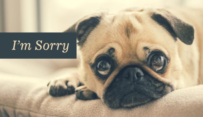 Hình ảnh chú chó buồn xin lỗi