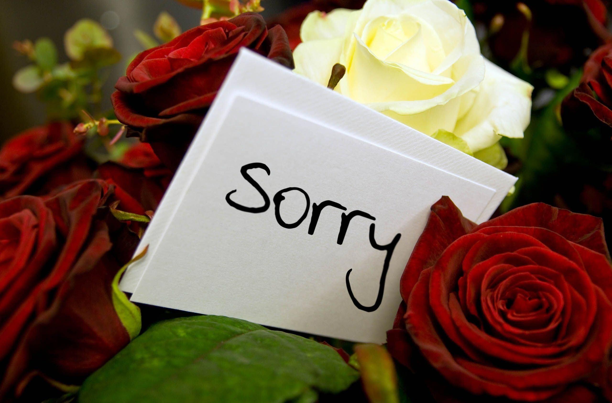 Hình ảnh hoa hồng và thiệp xin lỗi