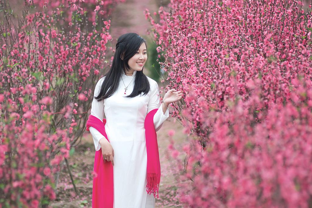 Hình ảnh hoa đào hoa mai ngày Tết