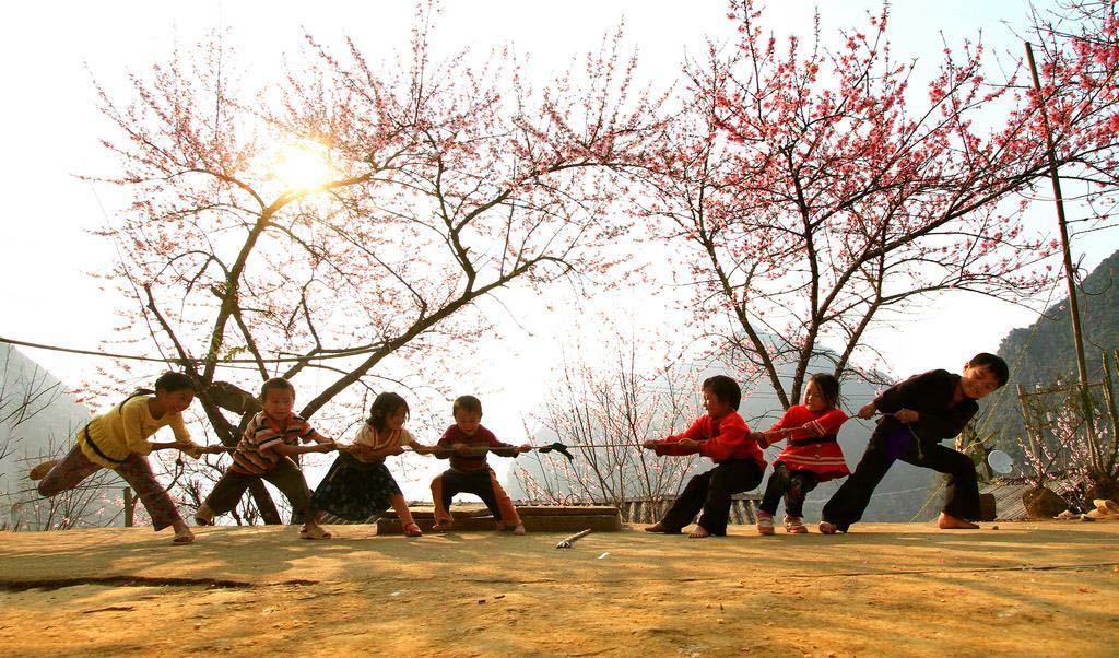Hình ảnh hoa đào nở rộ ở Hà Giang