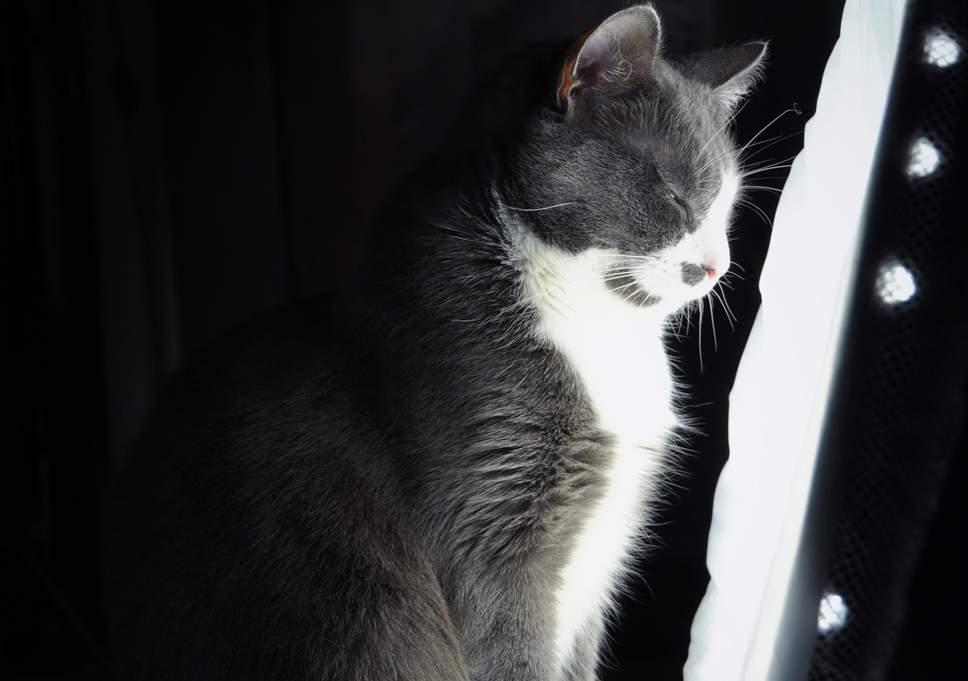Ảnh chú mèo cô đơn