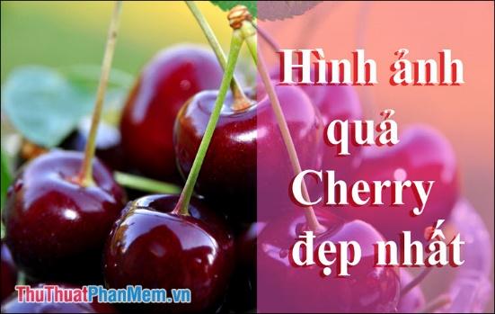Quả Cherry - Những hình ảnh quả Cherry đẹp nhất