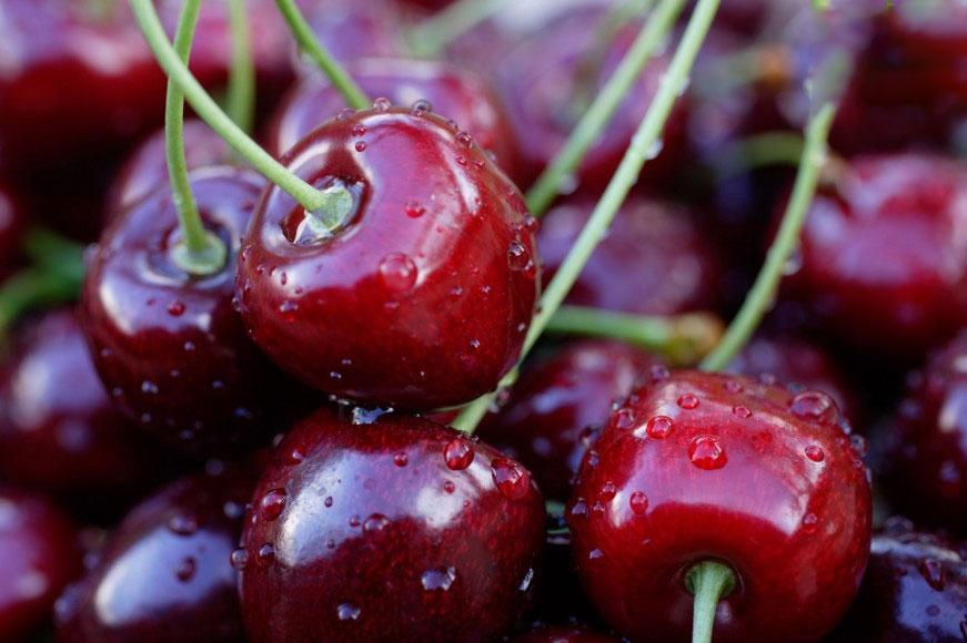 Cherry bán ở đâu giá rẻ