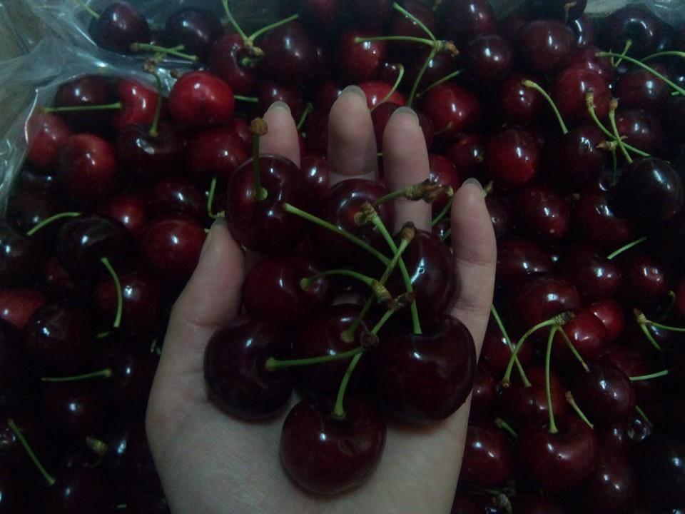 Hình ảnh bảo quản cherry nhập khẩu