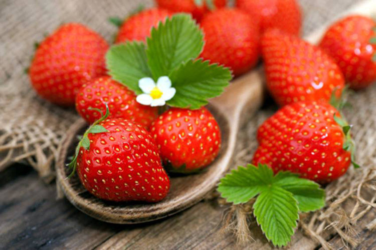 Hình ảnh trái cherry dâu đẹp nhất