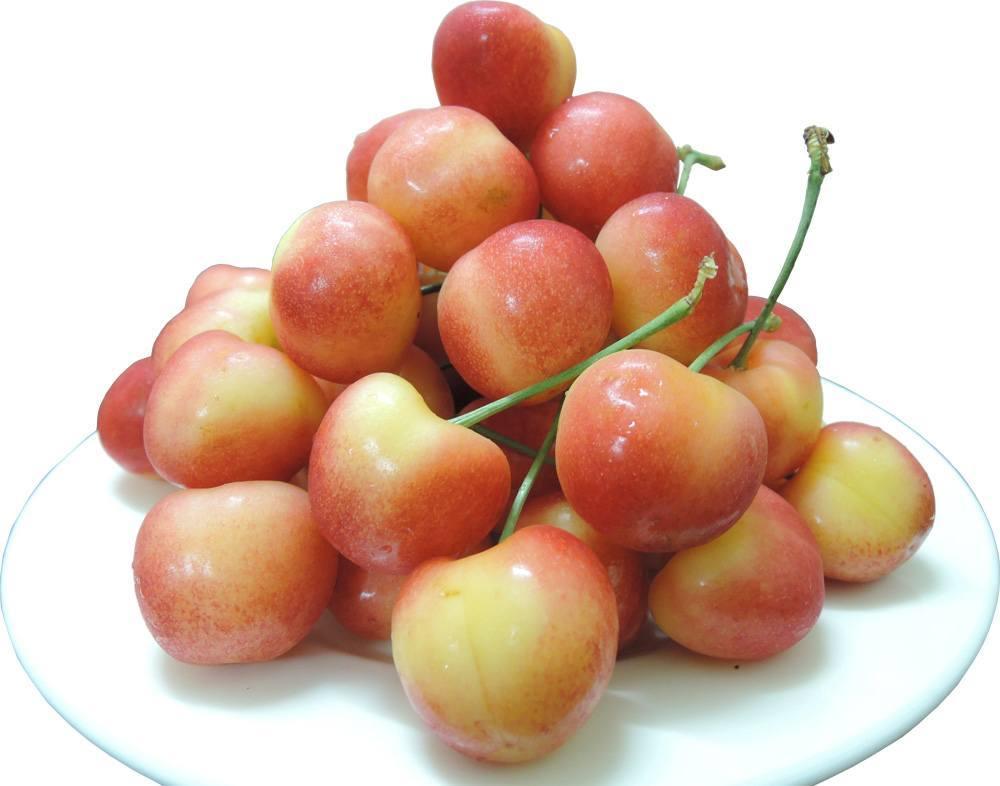 Quả cherry vàng Mỹ s