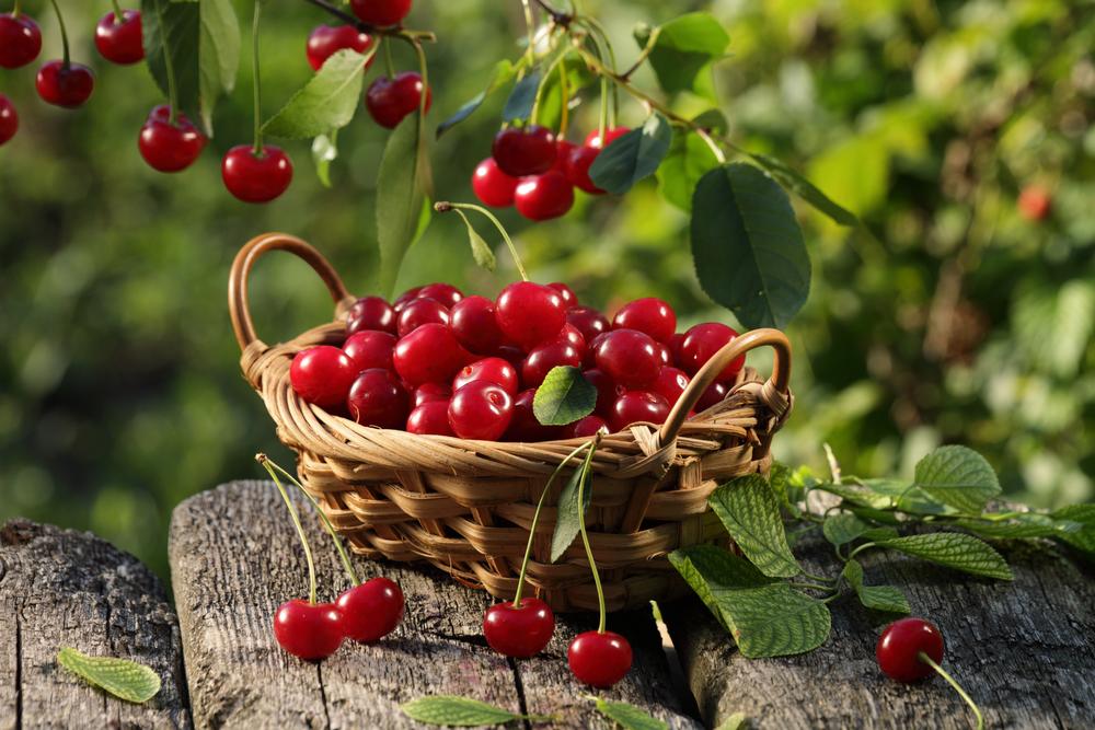 Tổng hợp hình ảnh quả Cherry đẹp nhất