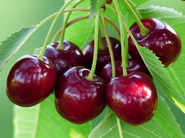 Trái Cherry bao nhiêu tiền 1 cân