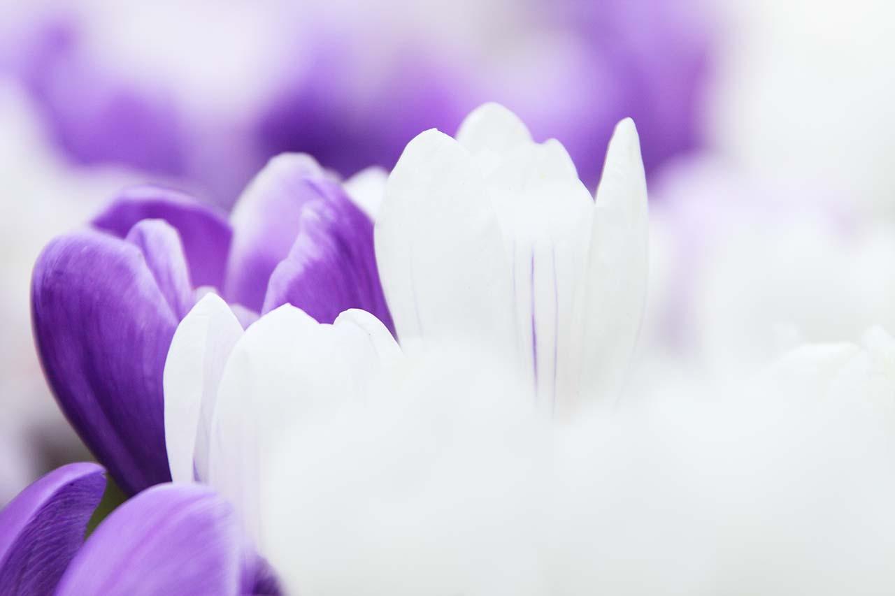Background hoa đẹp