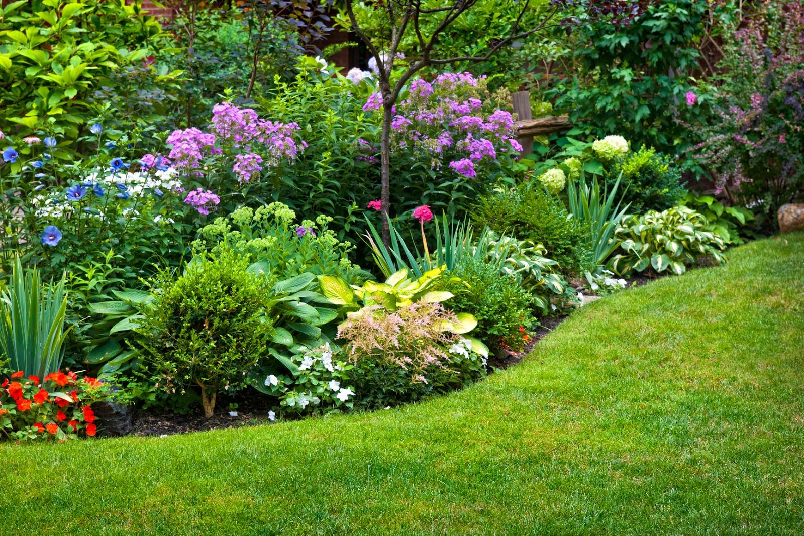 Ảnh mẫu vườn hoa đẹp