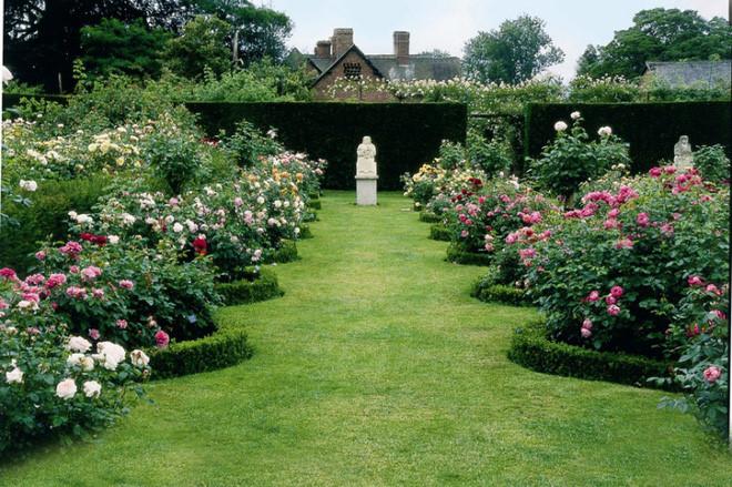 Ảnh vườn hoa hồng đẹp nhất thế giới