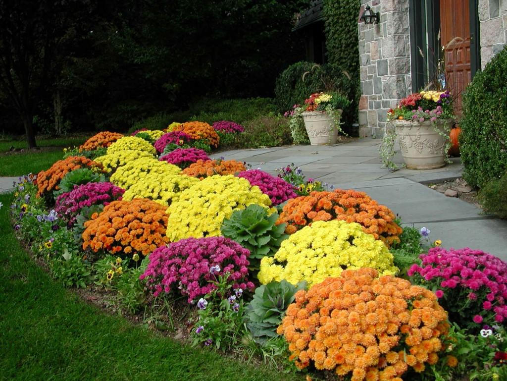 Ảnh vườn hoa nhỏ đẹp